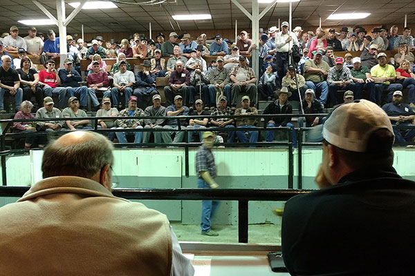 Auctioneer's View